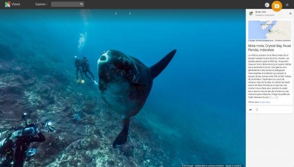 Google permet d'explorer la faune marine, comme ici au large de l'Indonésie.