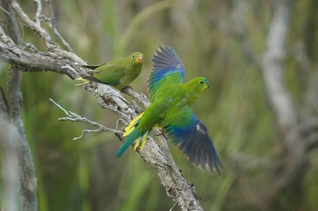 Crédit : Difficult Birds Research Group